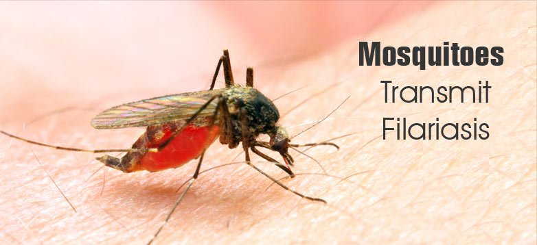 causes-of-filariasis-mosquitoes